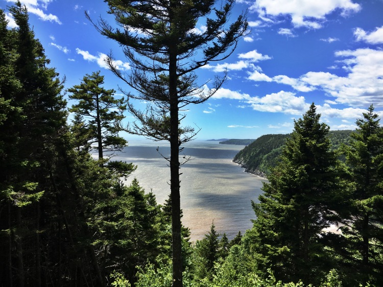 Fundy Trail Lookout 2 - Fundy Trail Parkway